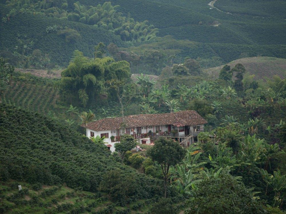 En el área predomina la caficultura de ladera, por lo que el proceso de recolección es manual. Esto asegura una calidad especial del café.
