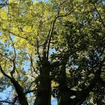Arborización Urbana del Jardín Botánico3