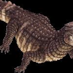 Crocodílidos amenazados