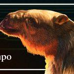un oso perezoso gigante y otras rarezas de la biodiversidad colombiana
