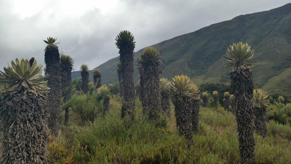 Parques naturales regionales en Boyaca