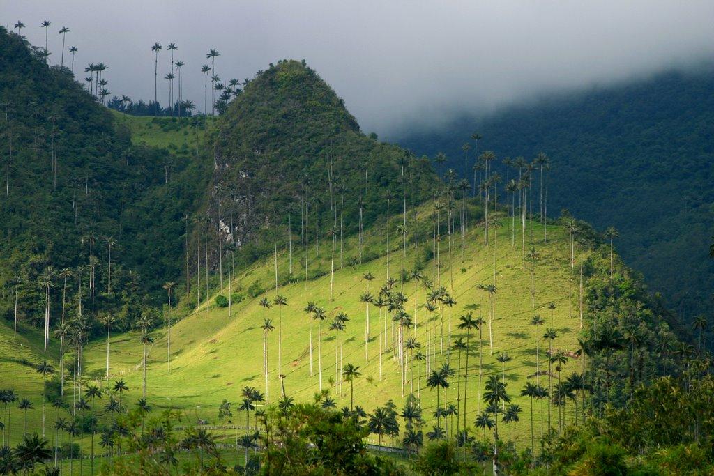 Valle de Cocora, en Quindío