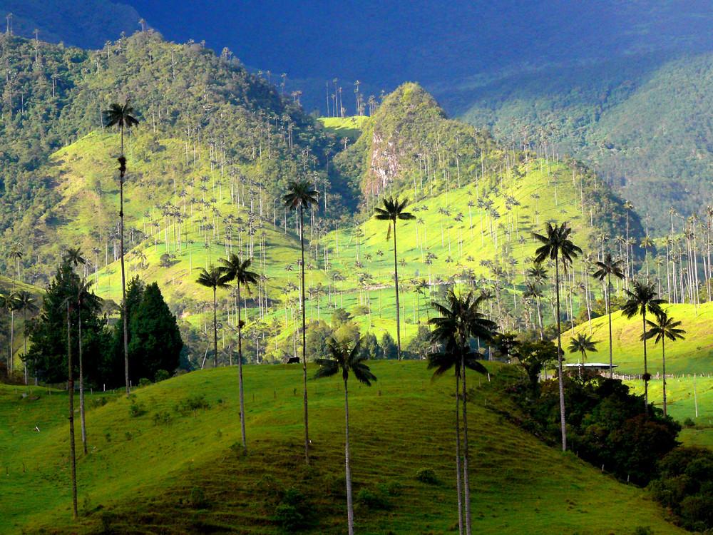 Valle de Cocora, en Quindío2