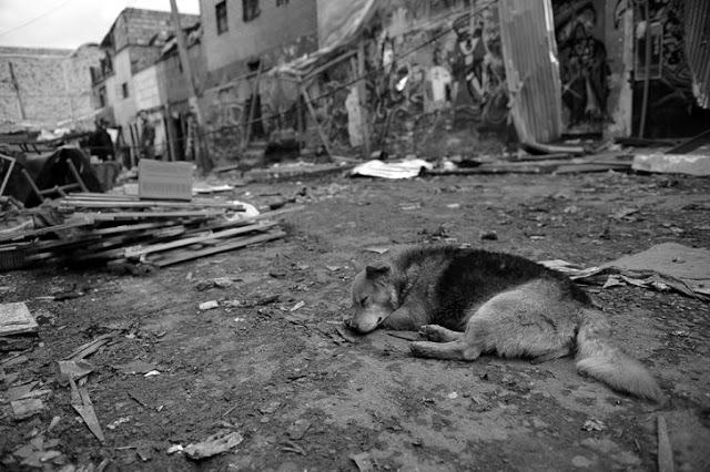 En el Bronx la miseria se vislumbra hasta en la precariedad y el abandono de animales domésticos. Foto: Cristian Garavito/El Espectador