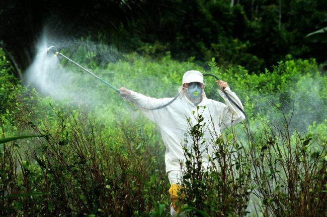 fumigación manual con glifosato contra los cultivos ilícitos