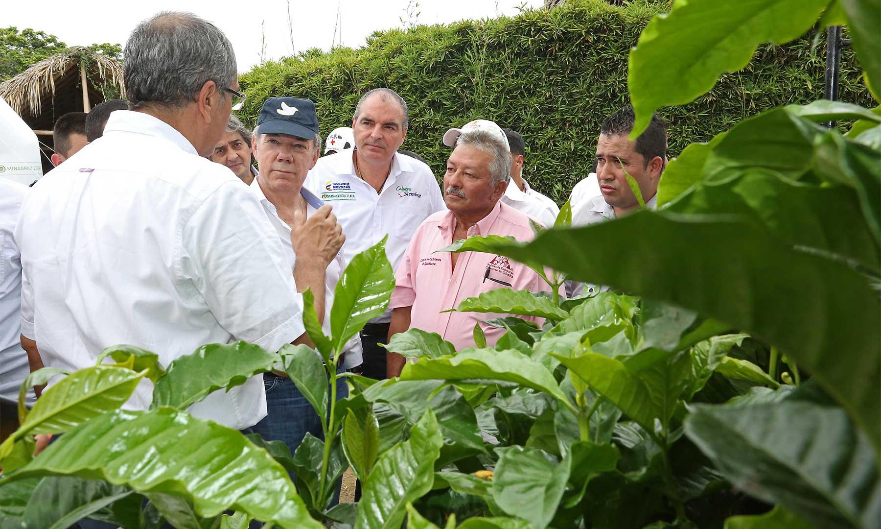 En medio de un cultivo de café y acompañado por el Ministro de Agricultura, Aurelio Iragorri, el Presidente Santos agradeció al Parque Panaca su contribución con la reintegración plena a la vida civil de miles de desmovilizados.