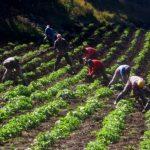 Mejores ingresos a los campesinos
