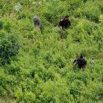 COLOMBIA PRESENTA PLAN PARA LUCHA CONTRA CULTIVOS ILÍCITOS EN ZONA DE TUMACO