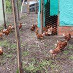 Proyecto Agricola en el Sumapaz (2)