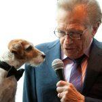 """Uggie, el perro de la película """"The Artist"""", es entrevistado por Larry King en Nueva York. REUTERS/Andrew Kelly/Imagen de archivo"""