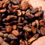 Granos de Cacao para Chocolate