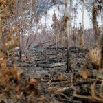 Zona quemada de la selva amazónica derca de Apui, estado de Amazonas, Brasil. REUTERS/Ueslei Marcelino