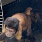 Cerca de 100 animales de especies silvestres fueron liberados en Vichada por la Fuerza Aérea Colombiana