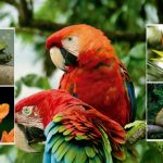 Flora y la fauna silvestre en Bogotá