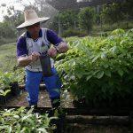 Rafael Santofimio, exguerrillero de las FARC y firmante del acuerdo de paz con el Gobierno de Juan Manuel Santos, sostiene una planta de semillero durante una visita a uno de los viveros gestionados por antiguos rebeldes en el departamento del Putumayo, Colombia, 25 de agosto, 2021. REUTERS/Luisa González