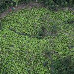Una vista aérea de las plantaciones de hoja de coca en zona rural de Tumaco, REUTERS/Luisa González