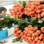 foto-cultivo-de-flores