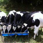 precio base de la leche al productor