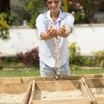 La Federación Nacional de Cafeteros promueve el cultivo del grano en Colombia y garantiza la compra del café a los caficultores locales.