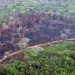 La Macarena, la zona más deforestada