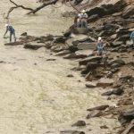 Rescate de peces por la disminución del caudal del río Cauca.  Foto: Cortesía EPM