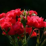Flores Colombianas en san Valentin